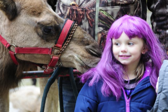 Easton Hoskins, 5, of Kimball Township reacts to a camel smooch from Thor at the Halloween Stroll on Saturday, Oct. 27, 2018 at Sanborn Park in Port Huron.