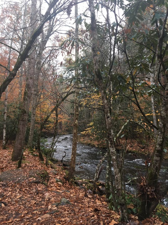 An autumn creek in the Great Smoky Mountains.