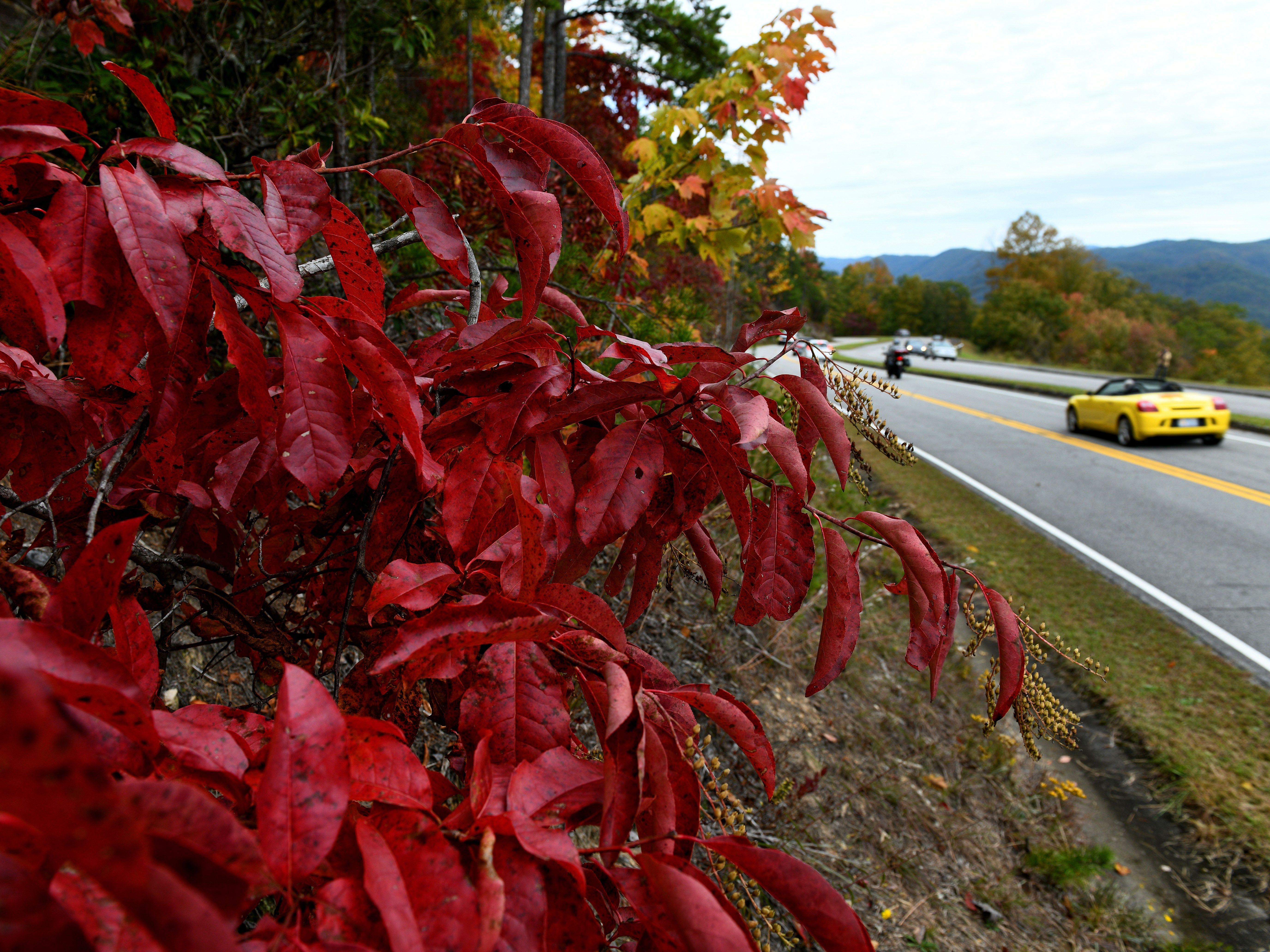 News Sentinel Photojournalist Michael Patrick took a photo safari looking for fall colors in Blount County Sunday, October 28, 2018.