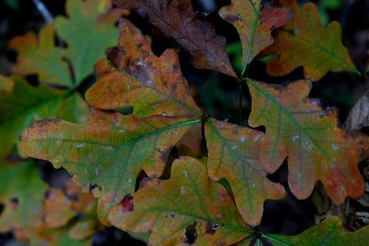 Fall Colors 17