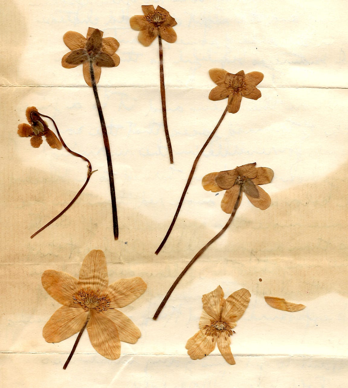 In a letter dated May 23, 1918, Harold Reilly included flowers that he had picked for his mother in No Man's Land from his most recent battle. Reilly left Marquette University in May 1917 to enlist in the U.S. Marines where he was assigned to the 81st Co., 6th Machine Gun Battalion. His unit arrived in France on Dec. 28, 1917.