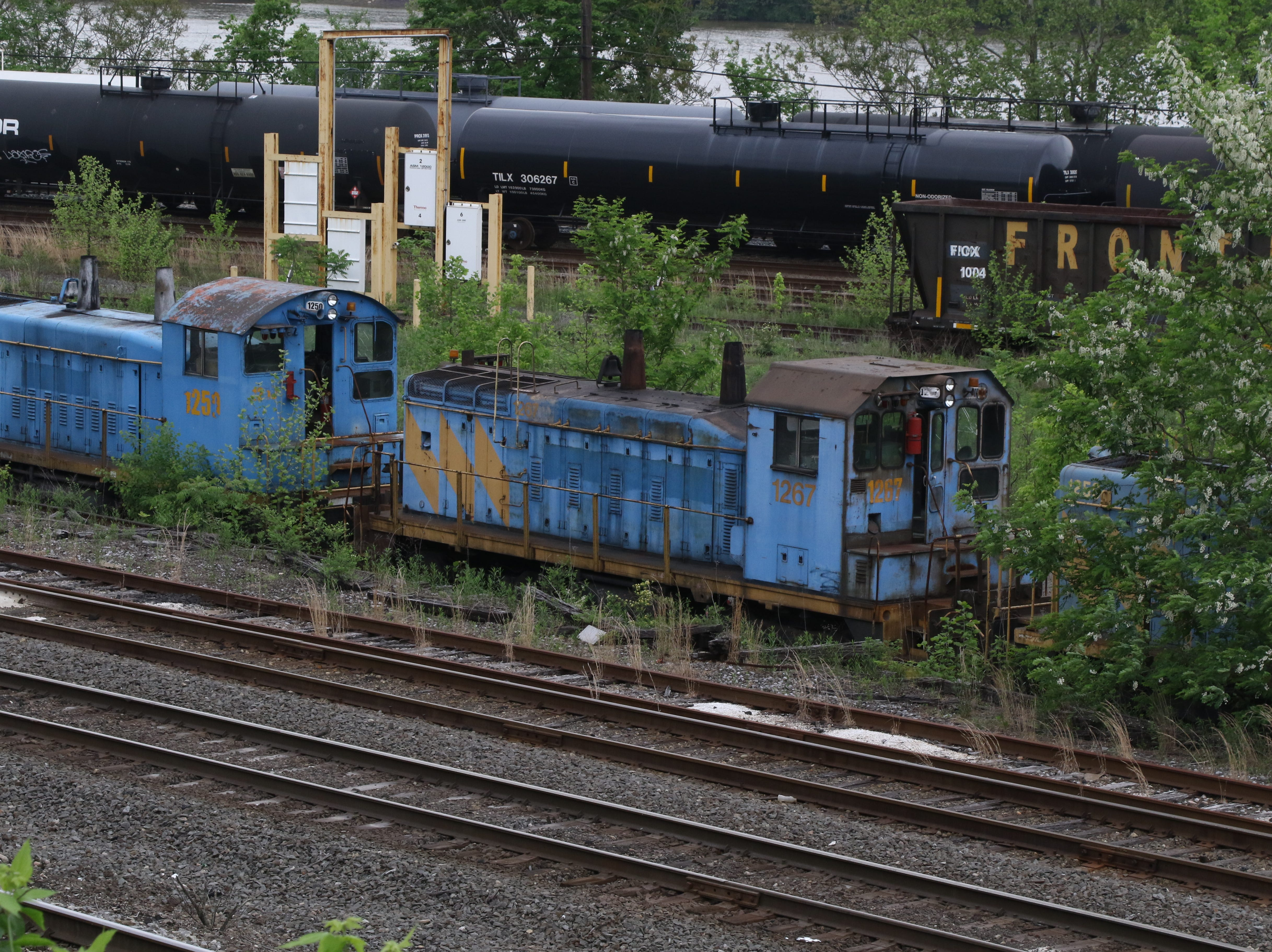 Over grown weeds and shrubs surround what is left of trains that once were part of a thriving steel industry.