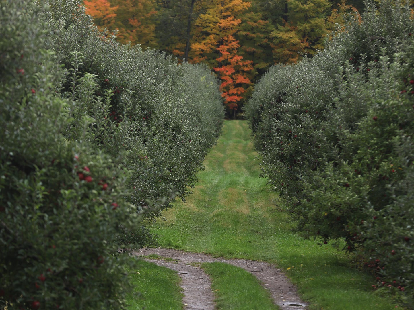 Sodus is a small rural community in Wayne County.  Orchard farmers are busy harvesting their apples.