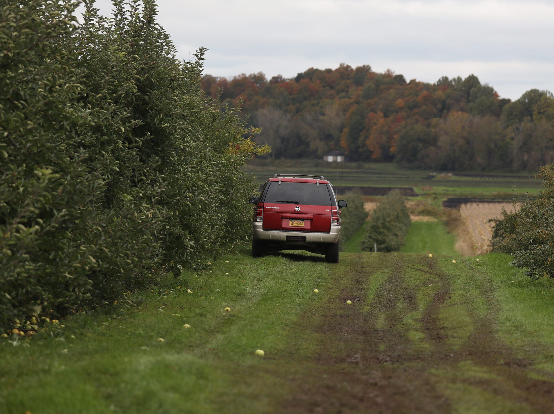 A few cars line up to harvest a row of apples at GMB Beckens Farms LLC.