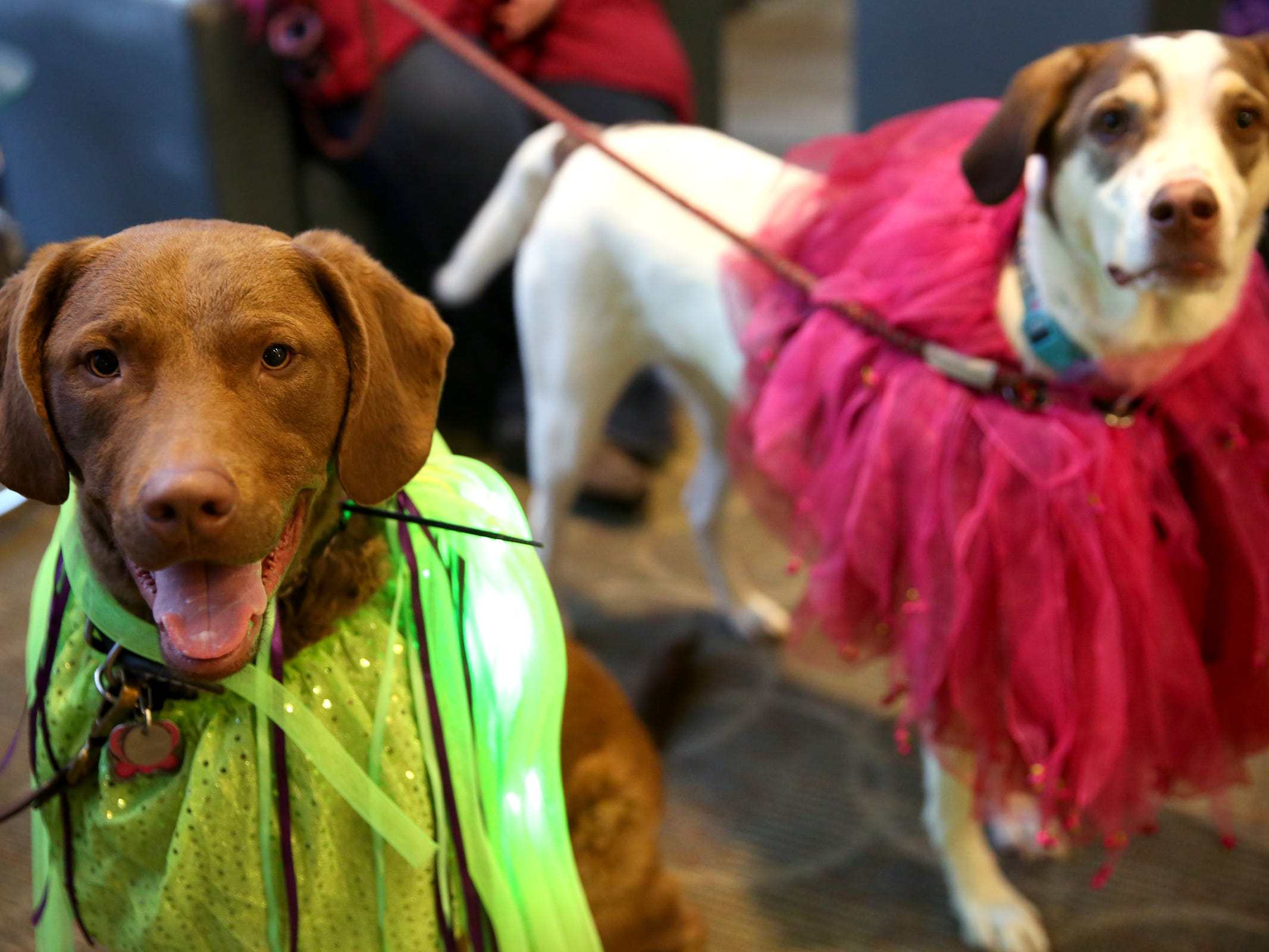 Ruby, left, and Chesapeake Bay Retriever, and Harley, a mix, owned by Charlie and Kristy Spencer, of Salem, wear tutus at Bowser's Boo Bash, a fundraiser for the Willamette Humane Society, at the Salem Convention Center on Saturday, Oct. 27, 2018. Harley was adopted from the Willamette Humane Society.