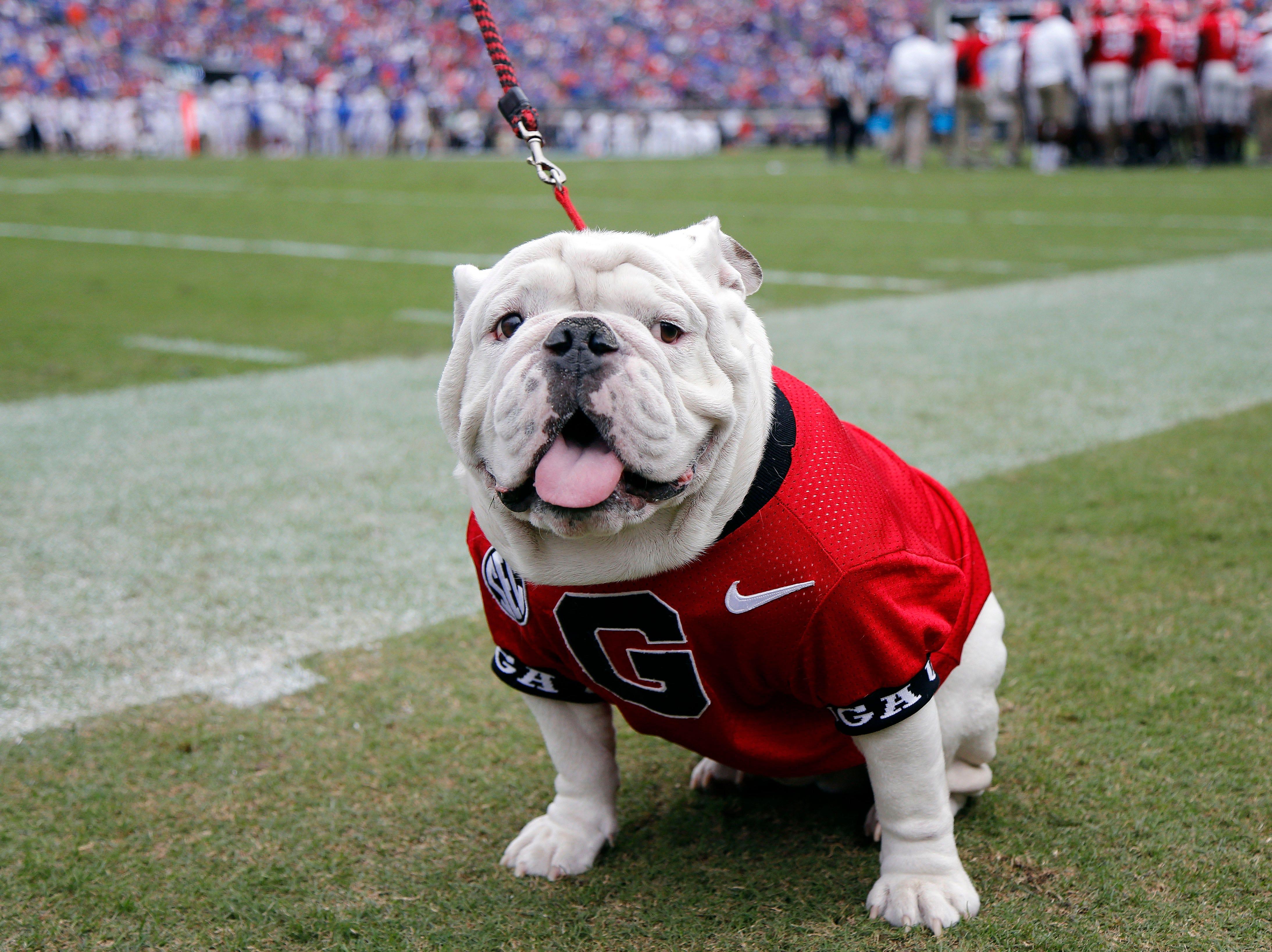 Week 9: Georgia Bulldogs mascot UGA on the field during the Florida-Georgia game.