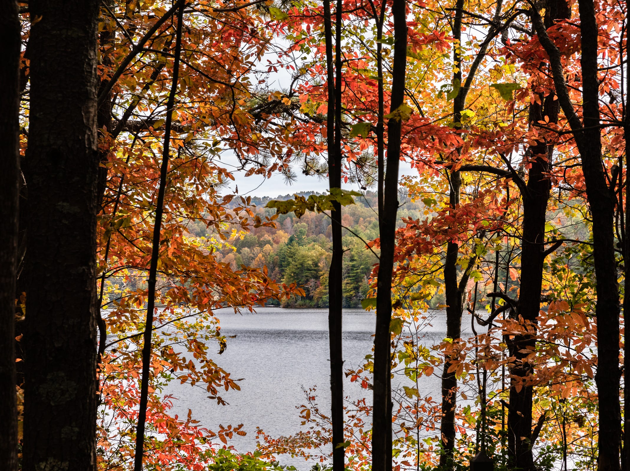 Some fall color can be seen at Lake Julia in DuPont State Recreational Forest, Oct. 25, 2018.