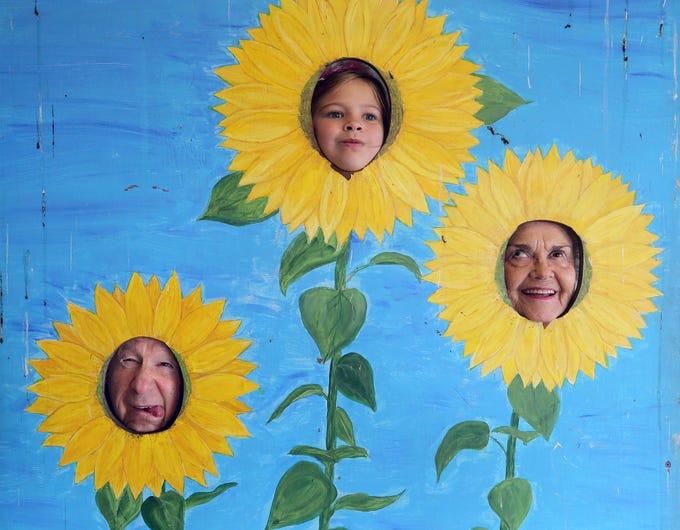 Glenn Hostetter, left, of Bremerton, his granddaughter Lucy Hostetter, center, from Seattle, and wife Carol make funny faces as they get their picture taken as sunflowers after touring the the corn maze at Pheasant Fields Farms in Silverdale on Monday. The maze is open daily from 10 a.m. until 6 p.m. until November 1.
