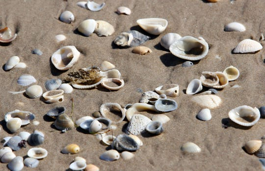Go beachcombing at Mustang Island State Park Saturday.