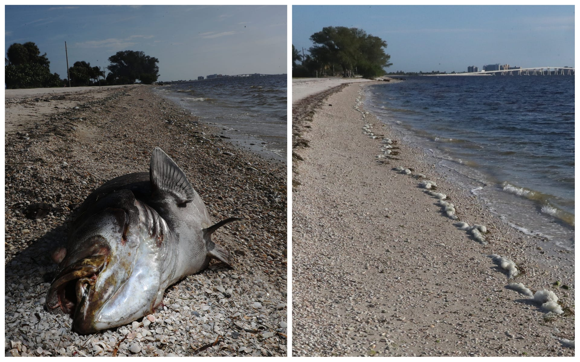 Before and after images show devastation, recovery from red tide on Southwest Florida beaches | USA Today