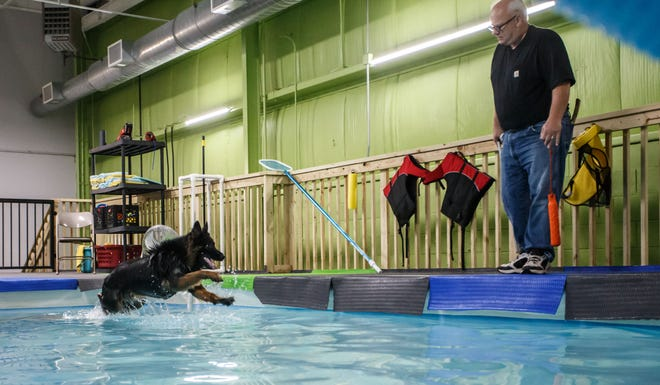 Customer Ken Zepnick works with Monty, his Long Haired German Shepherd, in the indoor heated dog pool at Aqua Therapups in Slinger on Monday, Oct. 29, 2018.