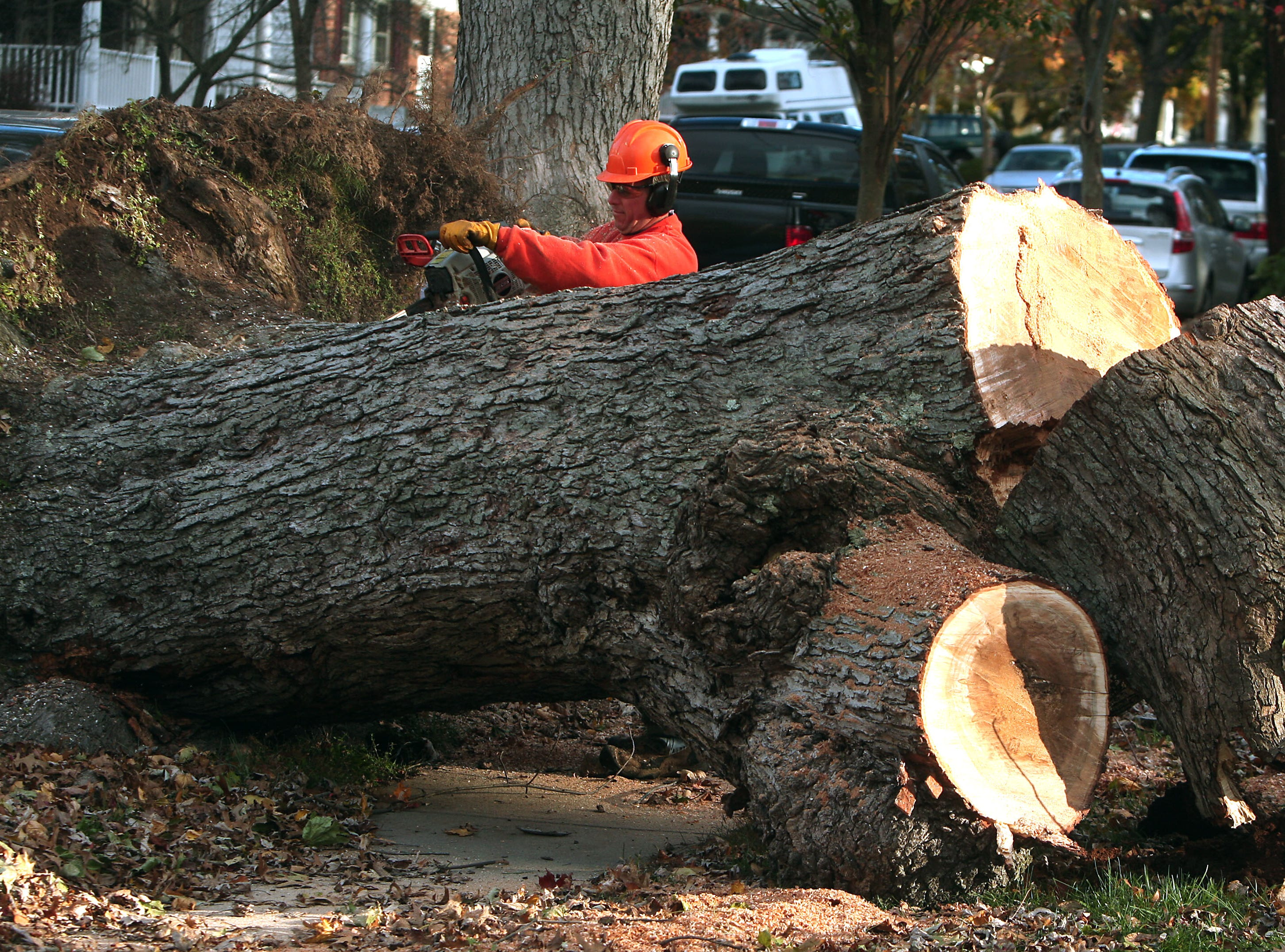 Morristown, N.J.- November 3, 2012--Troy Tuttle of the Morristown (NJ) Shade Tree Department uses a chain saw to cut up a 100-year-old silver maple that fell onto a house on Wetmore Avenue due to heavy winds from Hurricane Sandy. Bob Karp/Staff Photographer/DAILY RECORD