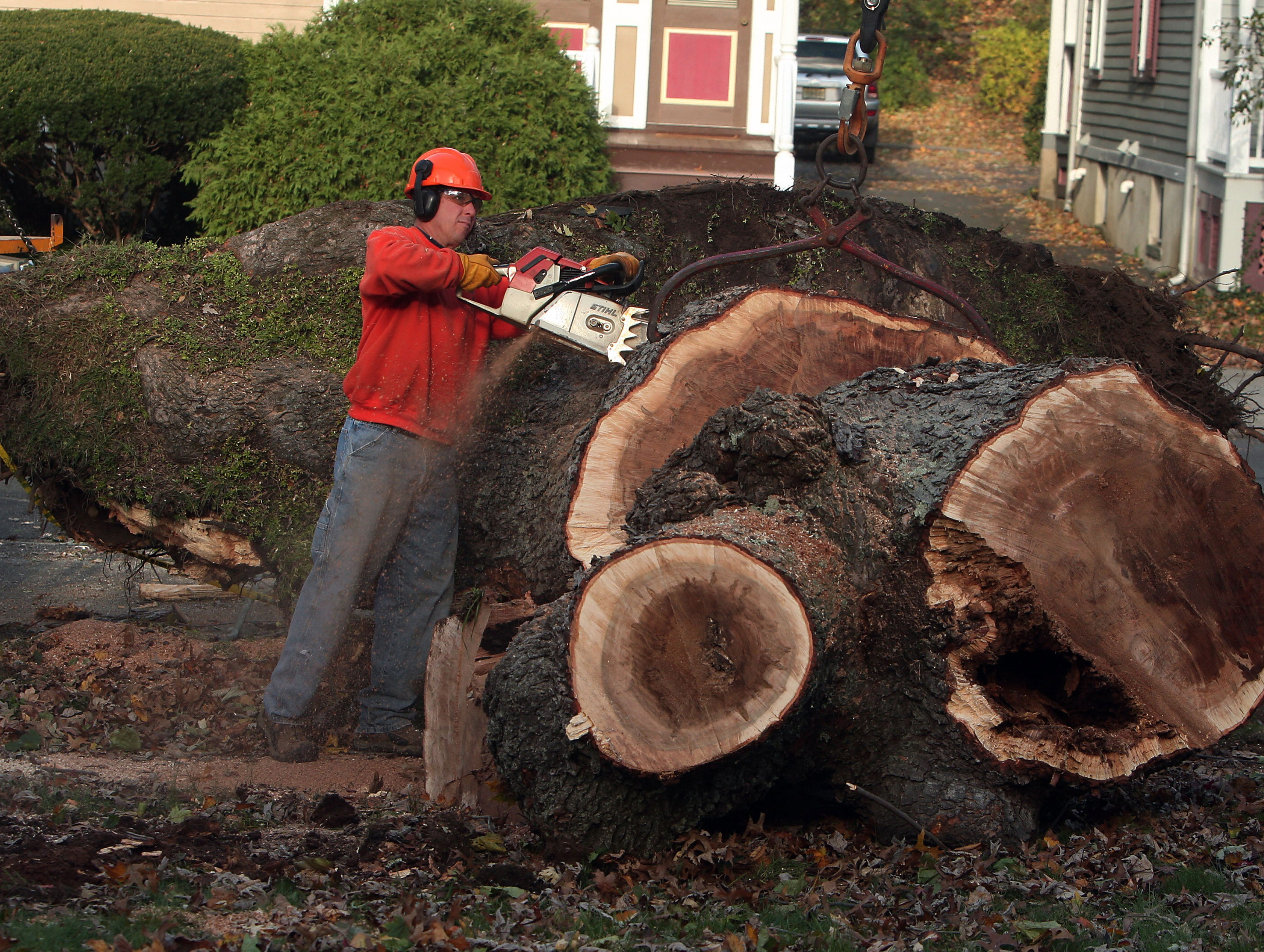 Morristown, N.J.- November 3, 2012--Troy Tuttle of the Morristown (NJ) Shade Tree Department uses a chain saw to cut up a 100-year-old silver maple that fell onto a house on Wetmore Avenue due to heavy winds from Hurricane Sandy. 