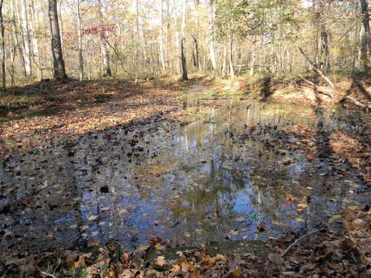 "Hall Springs, known in stories as ""Werewolf Springs,"" is along a hiking trail in Montgomery Bell State Park."