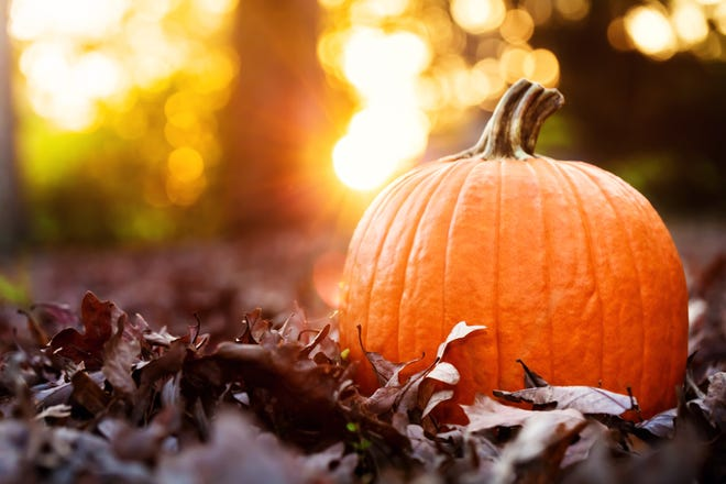 There are many recipes available that make pumpkins more than a fall decoration.