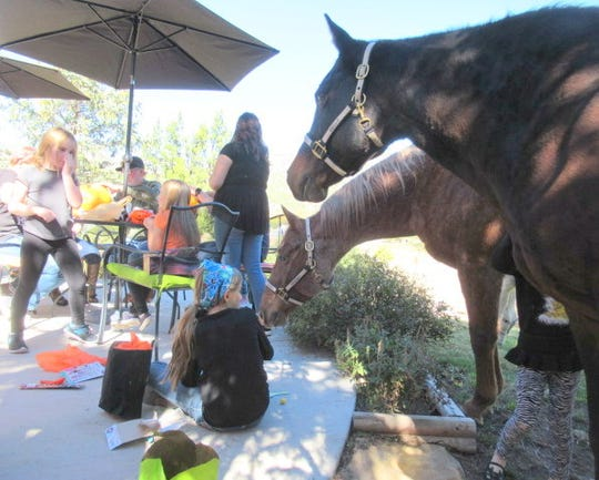 Matthew Midgett and his horses  were invited guests at an annual pumpkin carving party.