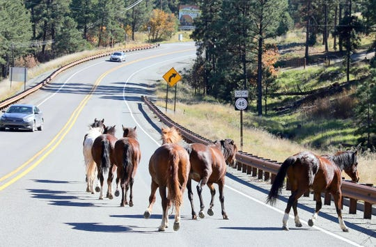 The wild horses on the highway in Alto and the entry to Ruidoso were welcomed by drivers, some of whom tried to direct the herd off the road.