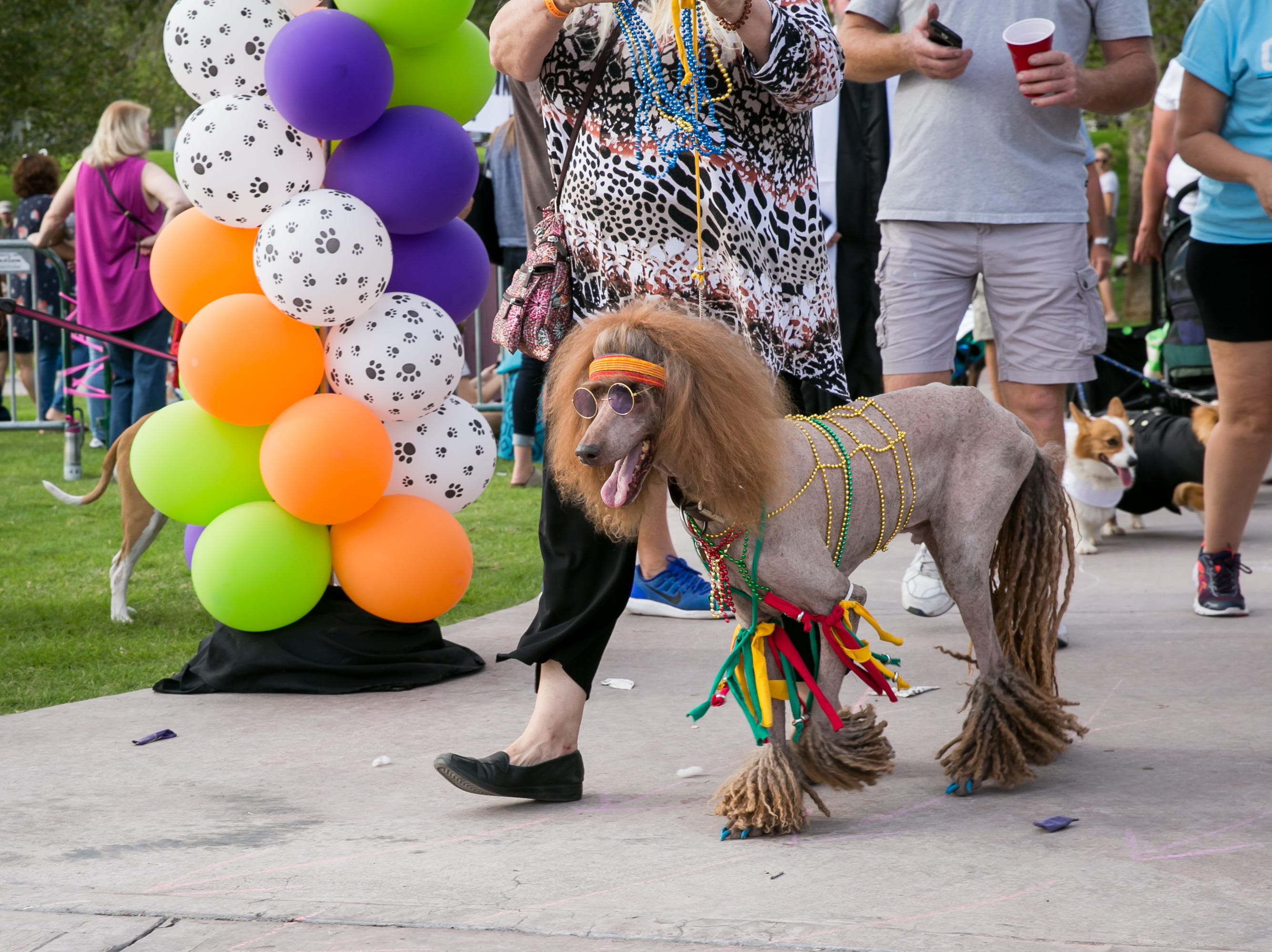 Hippie dog won the prize for best large dog costume during Howl-o-Ween at Hance Park on Sunday, October 28, 2018.