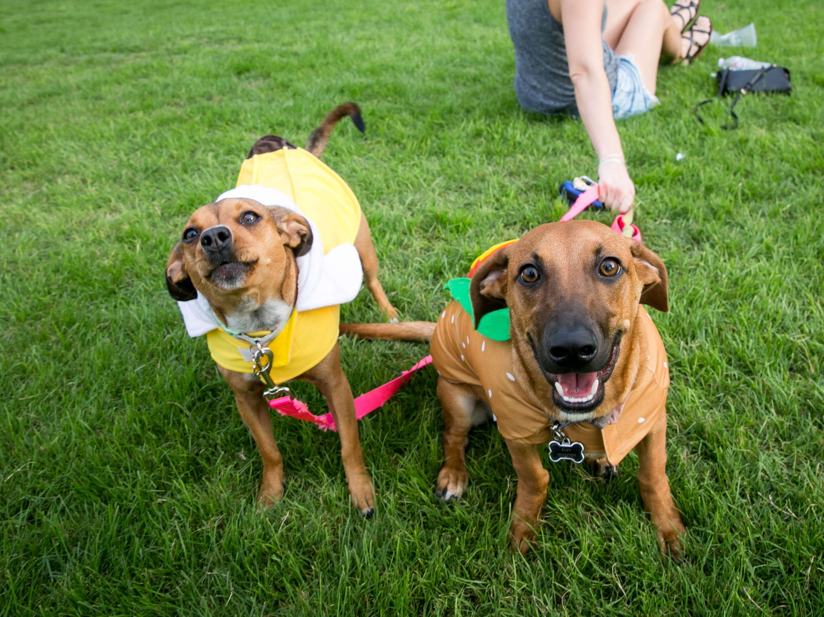 These pups made lots of new friends during Howl-o-Ween at Hance Park on Sunday, October 28, 2018.