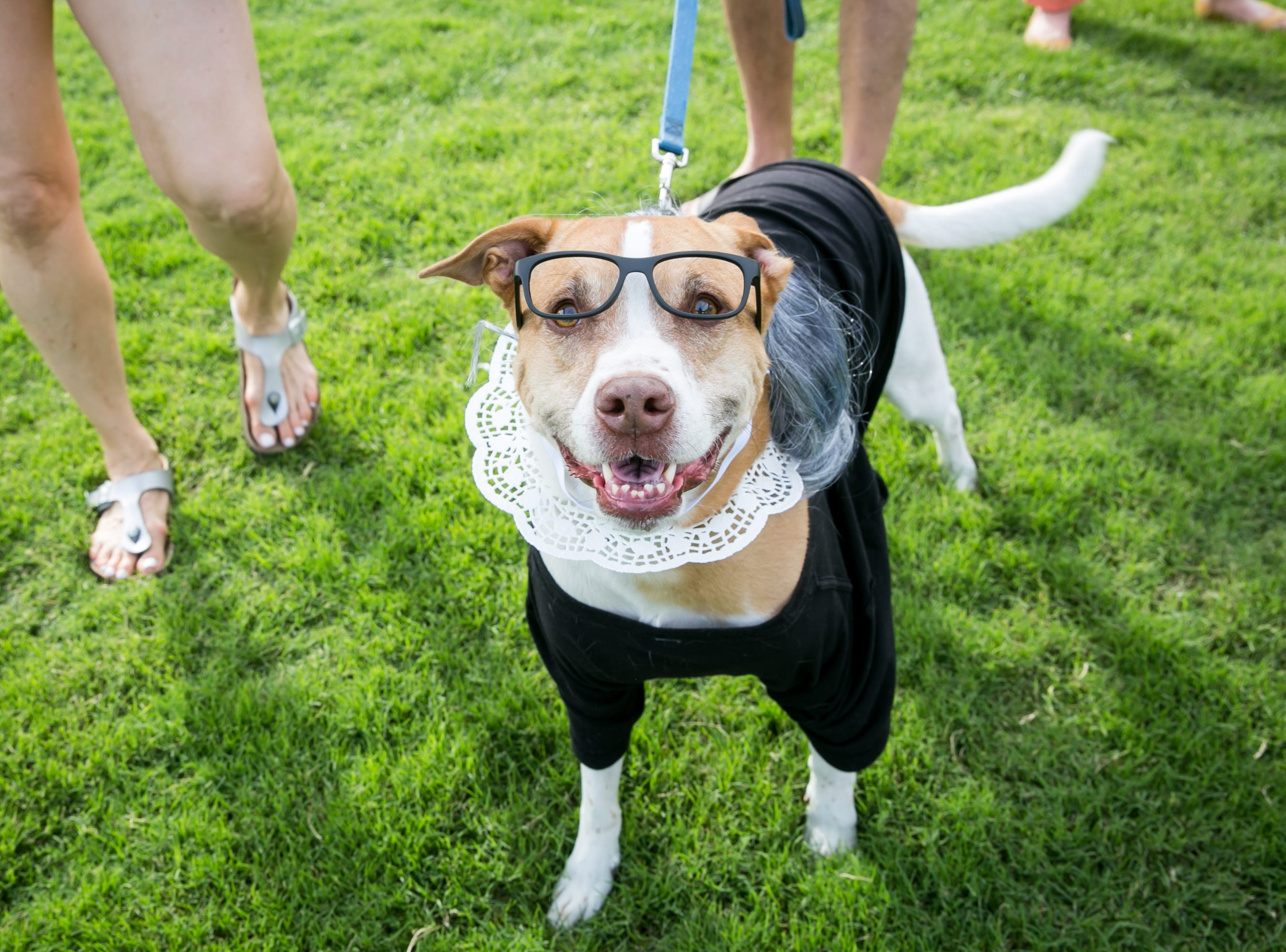 RBG dog looked judicial during Howl-o-Ween at Hance Park on Sunday, October 28, 2018.