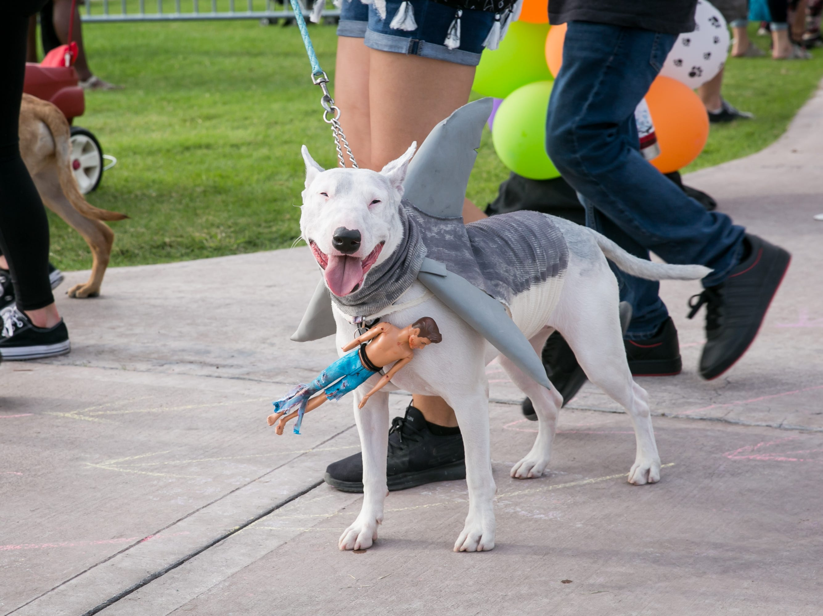 This dog was the cutest shark, ever during Howl-o-Ween at Hance Park on Sunday, October 28, 2018.