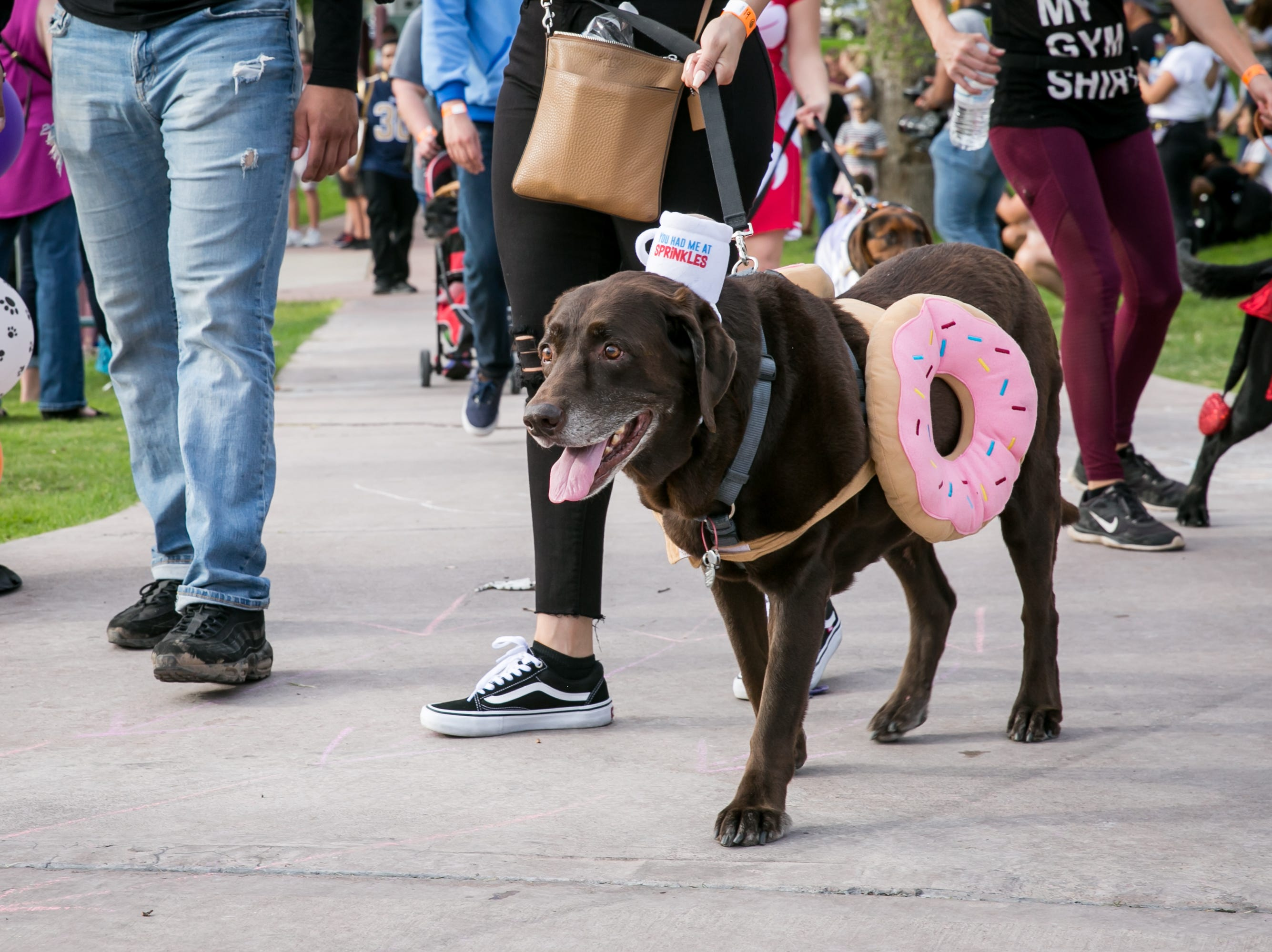 Donut dog was precious during Howl-o-Ween at Hance Park on Sunday, October 28, 2018.