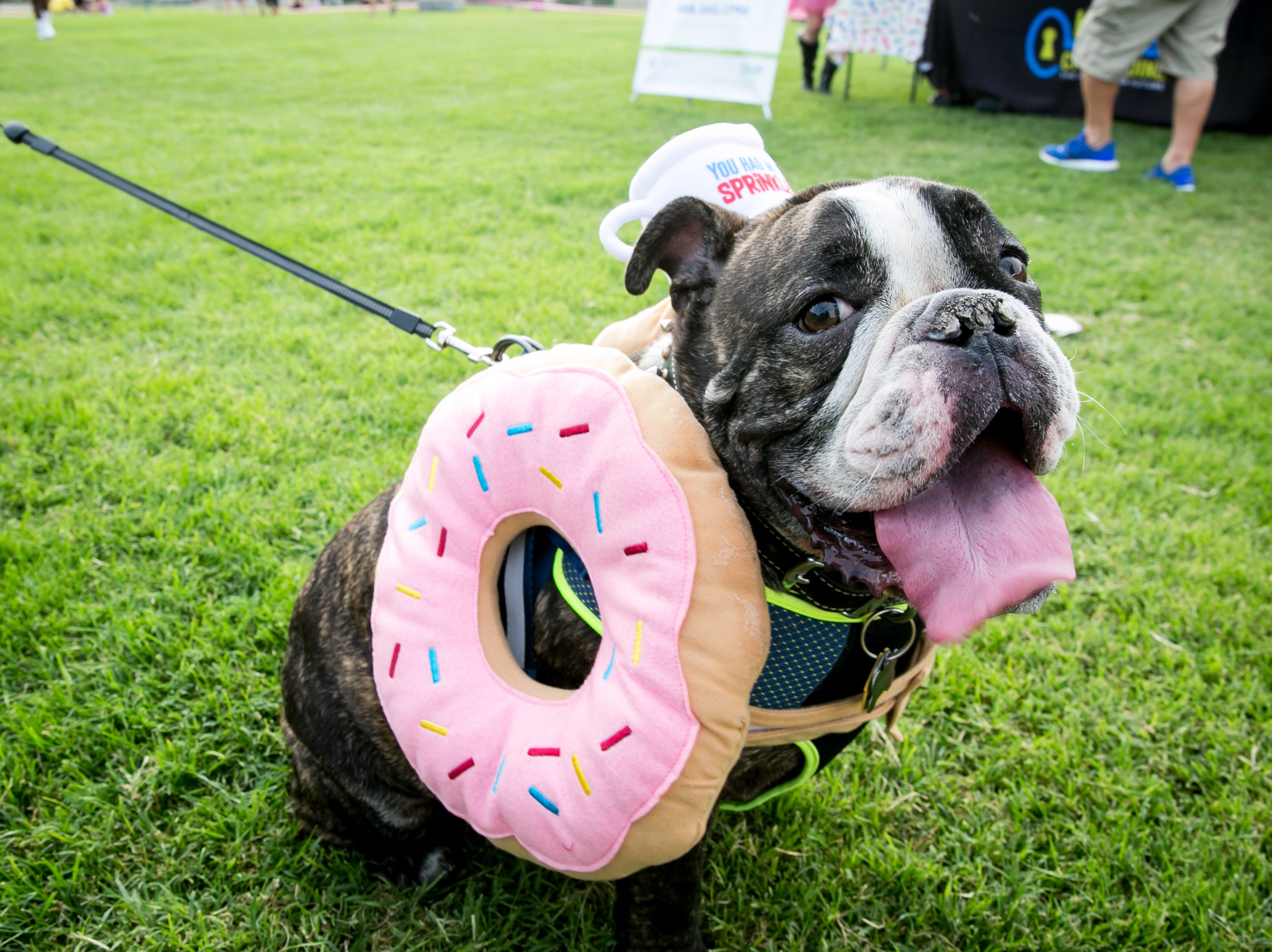 An adorable donut poses for a photo during Howl-o-Ween at Hance Park on Sunday, October 28, 2018.