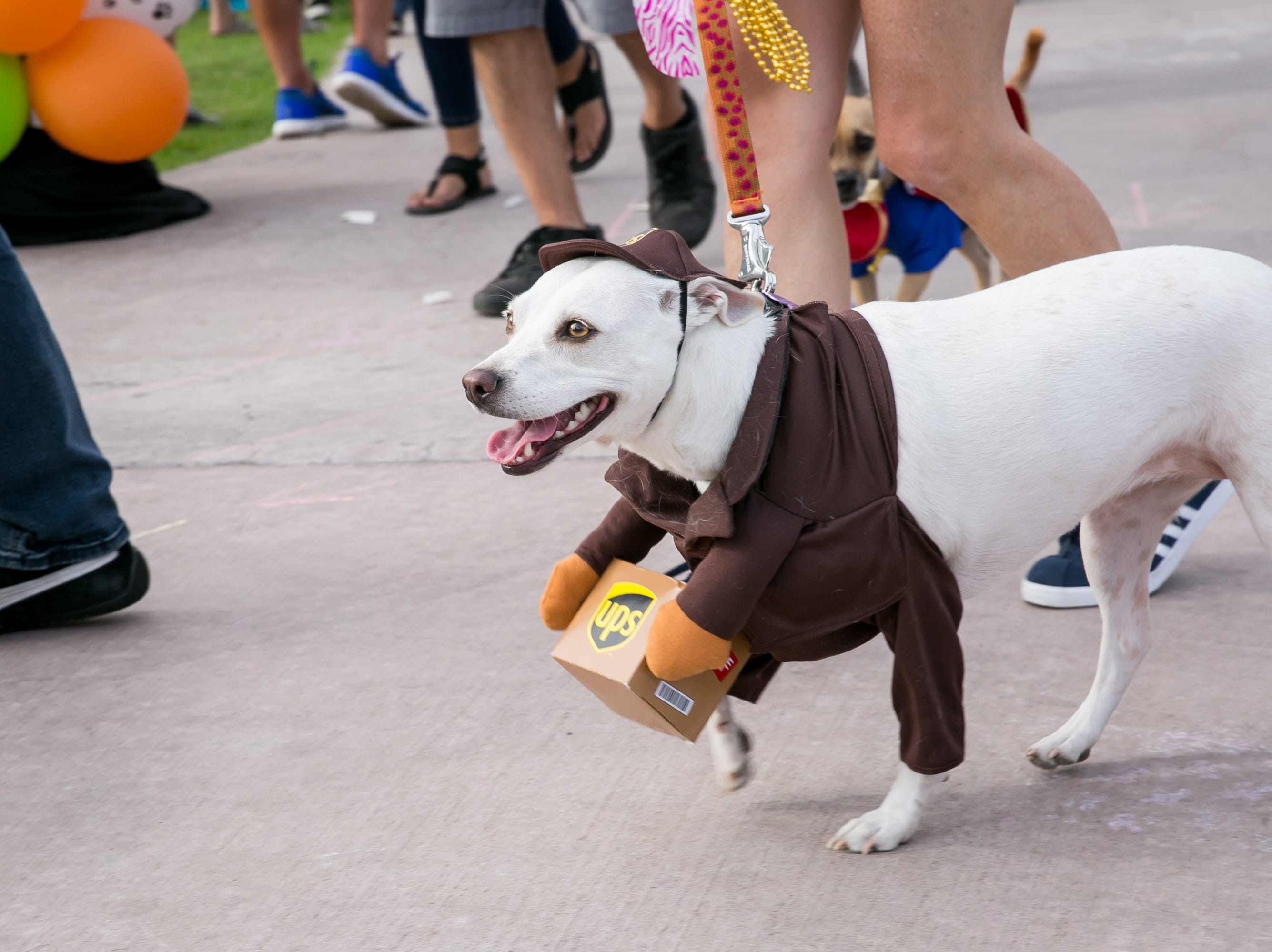This pup delivered an adorable package during Howl-o-Ween at Hance Park on Sunday, October 28, 2018.