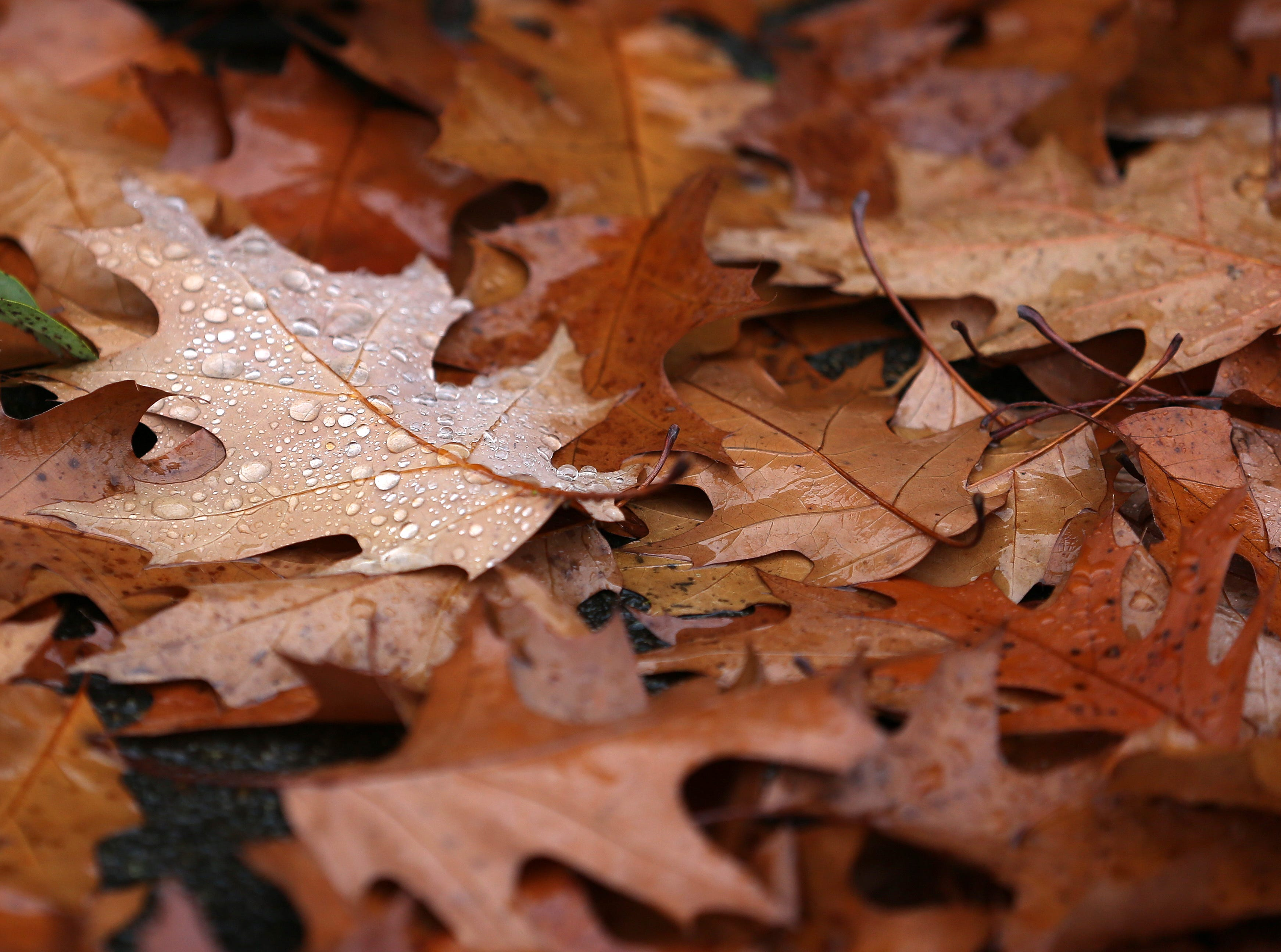 Residents can drop off bagged leaves at two events coming up in Salem.
