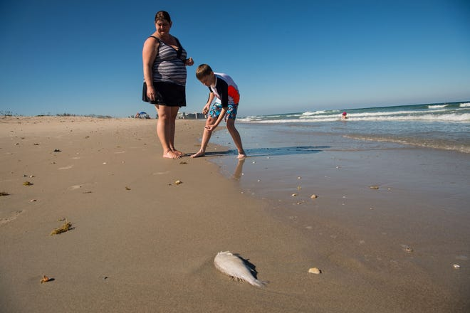 """Joshua Garner, 9, shows his mother, Jennifer Garner, both of South Dakota, shells while at Fort Pierce Inlet State Park on Monday, Oct. 29, 2018, in St. Lucie County. The two avoid one of the only dead fish visible, which had just washed up on shore after a cleanup effort in the area. """"My husband got back after a year-long deployment, and we decided to take the week off and come down here,"""" Jennifer Garner said. """"We weren't even really aware of it until we came here — we met some friends in Vero Beach, and that's when we realized,"""" she said, referring to the many beach-closings due to red tide. """"Today's our last day, so we wanted to have a beach day."""""""