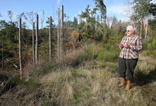 Sally Harrison looks out across land proposed for a quarry expansion, which borders her property in Gorst on Friday, Oct. 26, 2018.