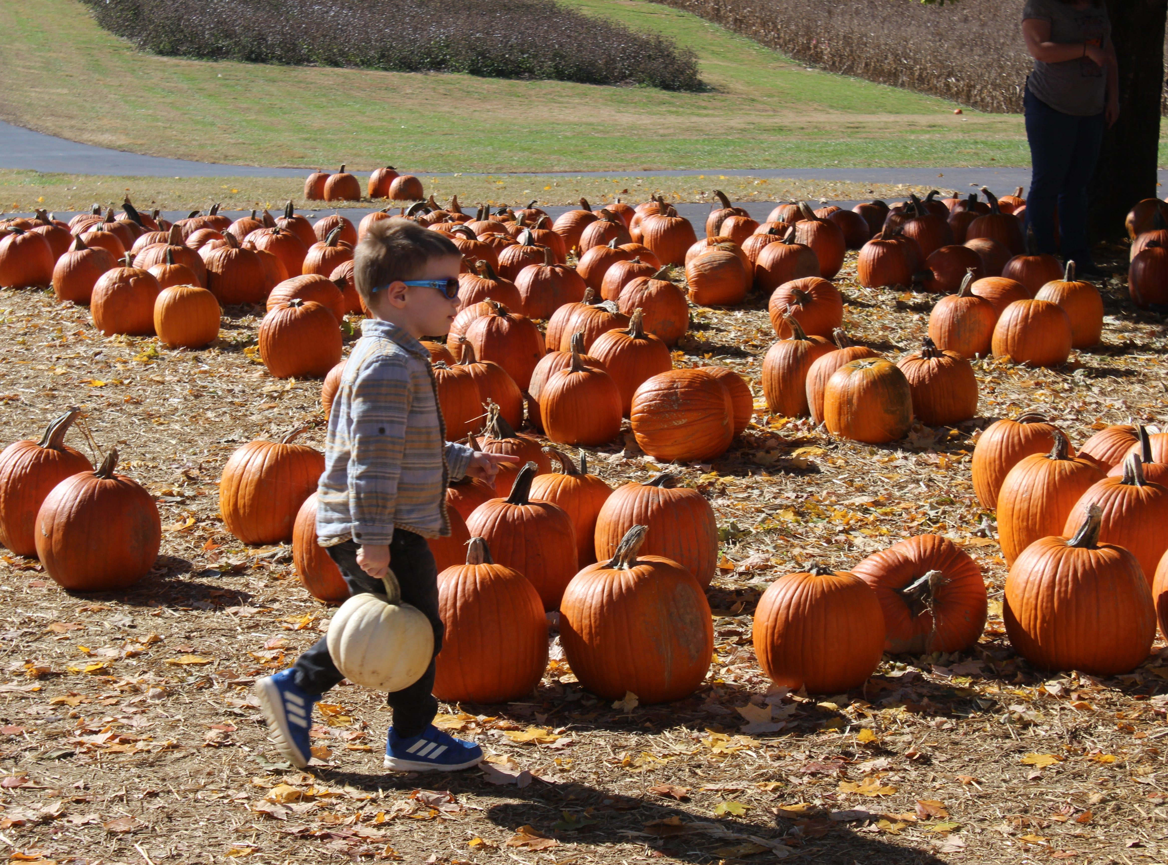 A boy picks out pumpkins at Boyd's Pumpkin Patch on Oct. 29.