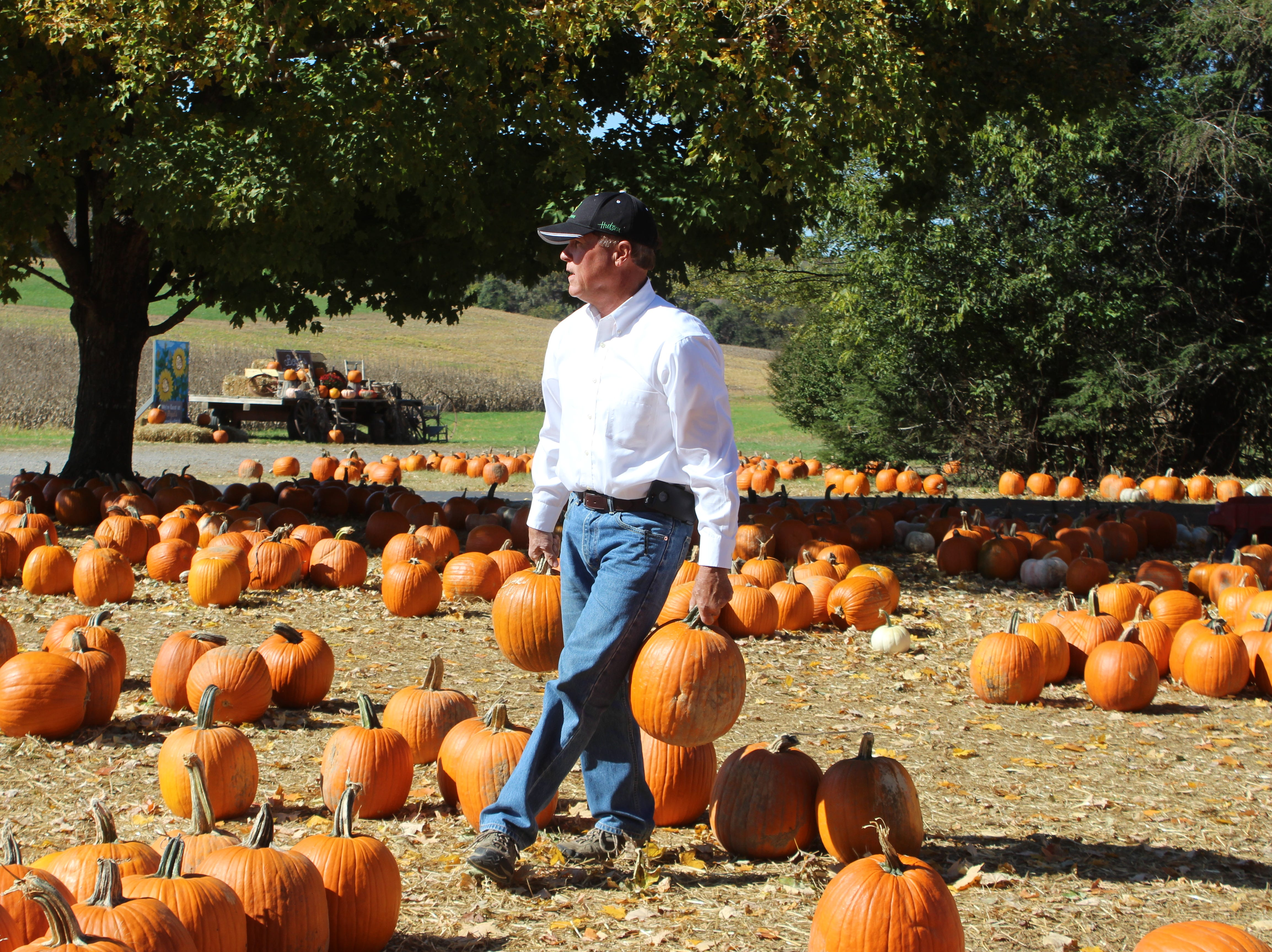 Montgomery county farmer Keith Boyd moves pumpkins at his annual pumpkin patch on Oct. 29.