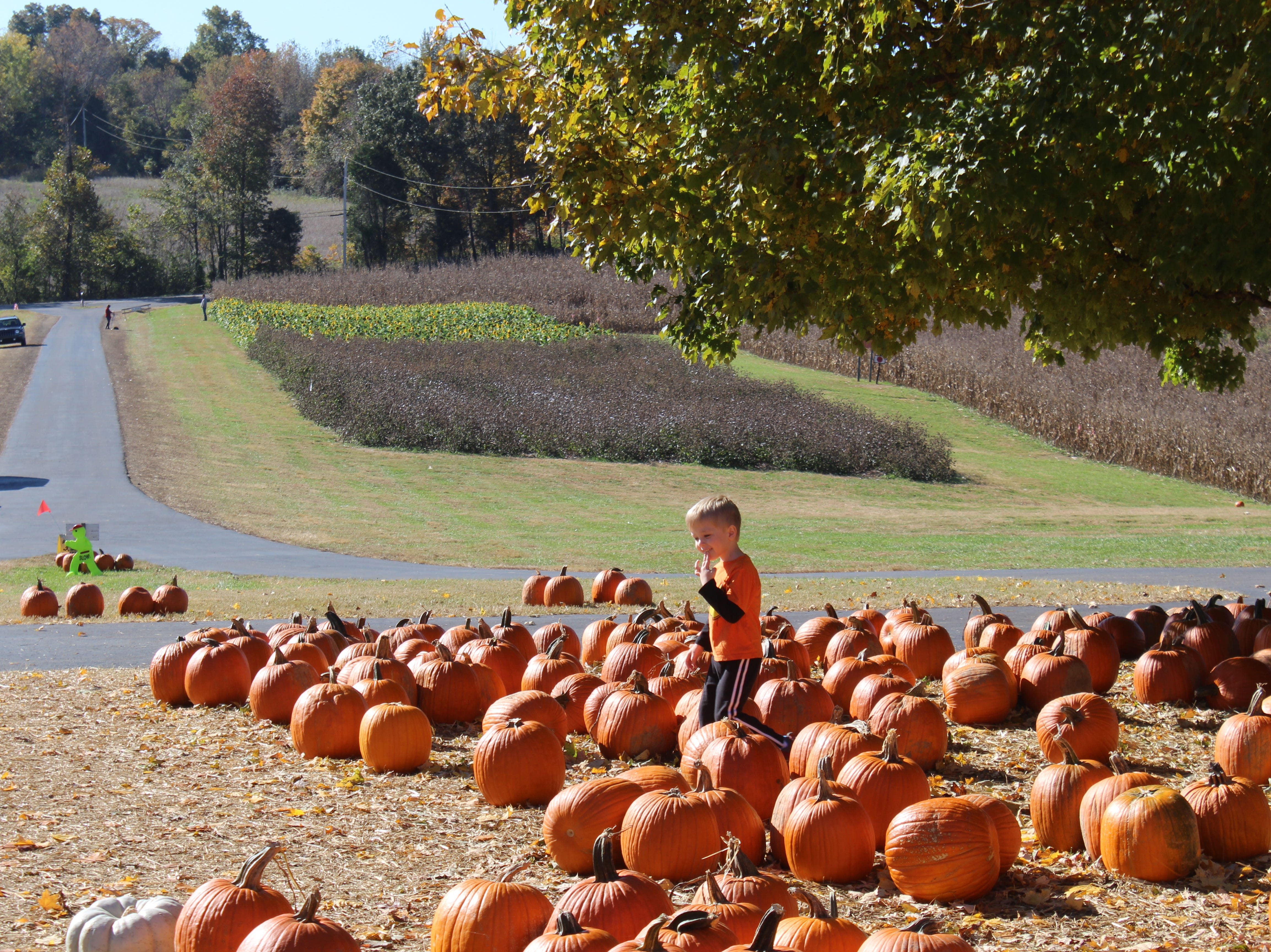 Picking out pumpkins is a favorite fall activity at Boyd's Pumpkin Patch, Oct. 29