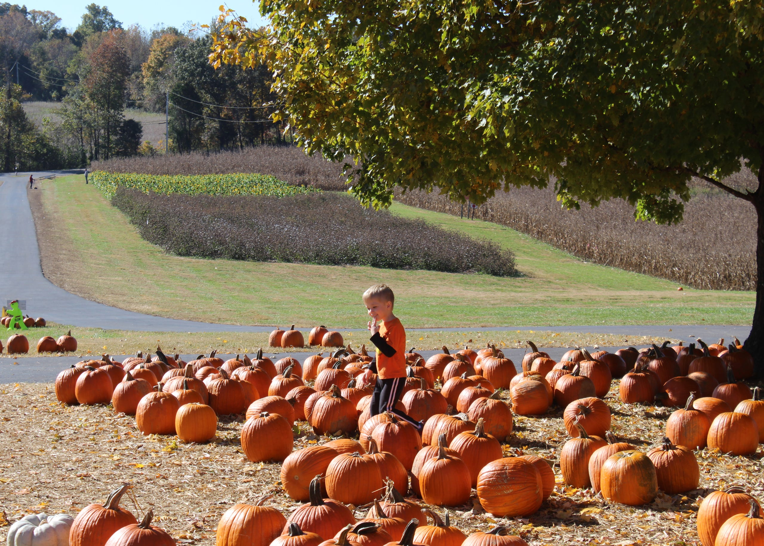 Apartments planned near Boyd's Pumpkin Patch