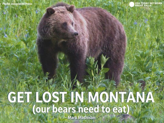 """Get Lost in Montana (Our bears need to eat)."" - Mark Mathison"