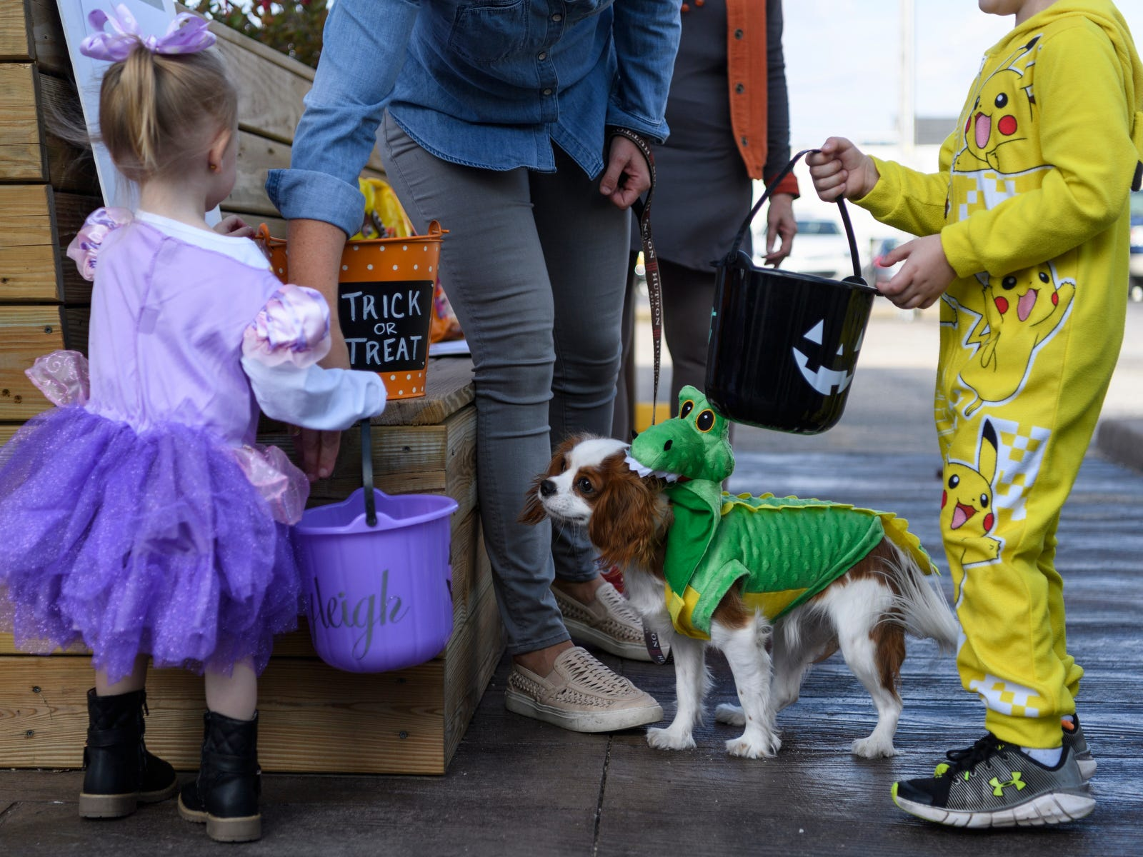 Charley, Lindsay Locasto's dog, supervises the candy giving during the trick-or-treat event along Second Street in downtown Henderson, Ky., Tuesday, Oct. 30, 2018.