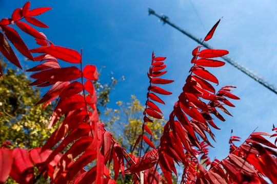 An AT&T cellular tower can be seen towering over in the sky past leaves that have turned red in late fall during a ceremonial opening for the expansion of wireless broadband coverage through AT&T cell towers at 4567 Brownsville Hwy in Denmark, Tenn., on Tuesday, Oct. 30, 2018.