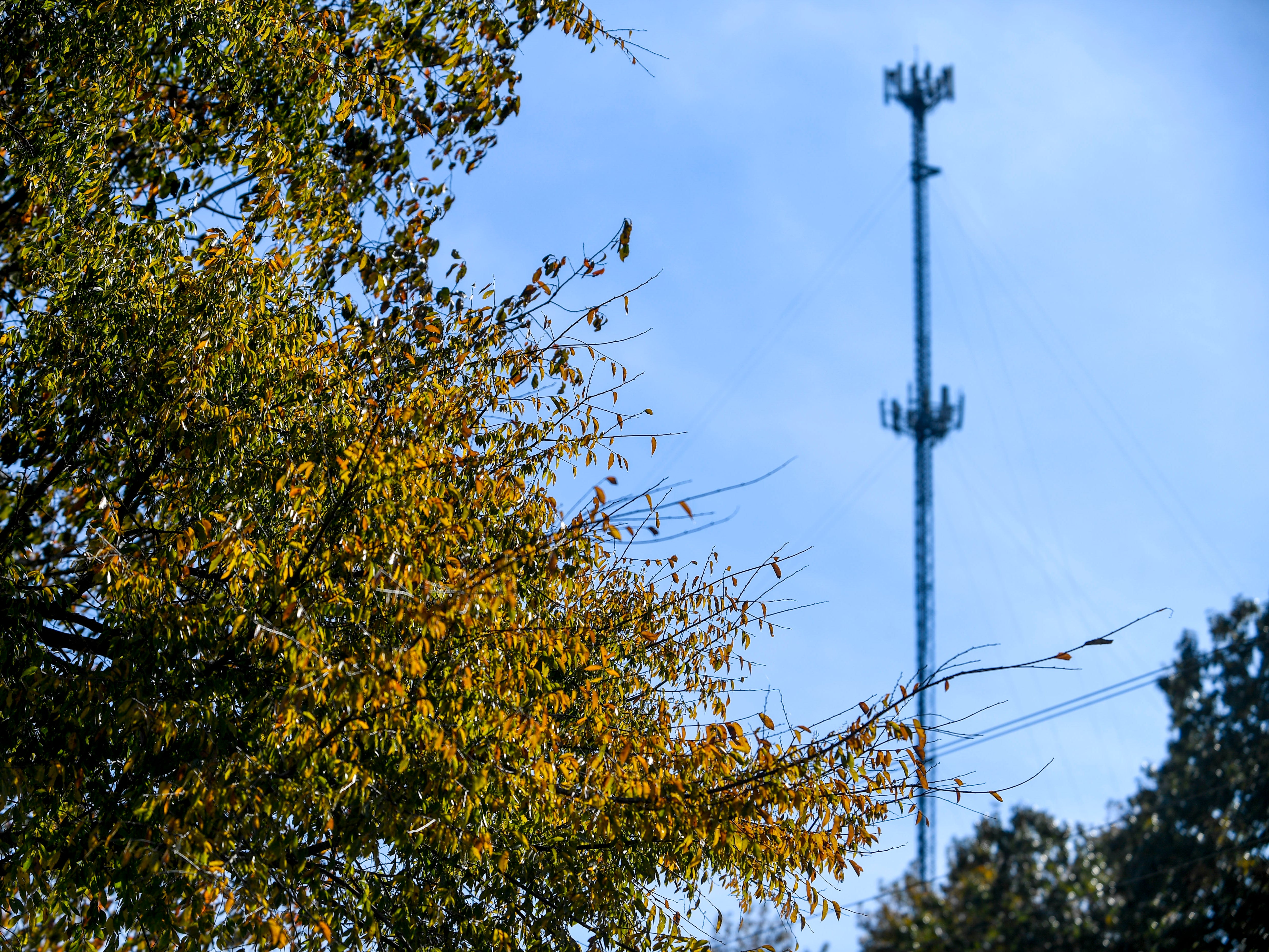 Leaves change color on trees lining the path to an AT&T cellular tower during a ceremonial opening for the expansion of wireless broadband coverage through AT&T cell towers at 4567 Brownsville Hwy in Denmark, Tenn., on Tuesday, Oct. 30, 2018.