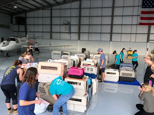 Acadiana Animal Aid partnered with  Wings of Rescue to transport 187 pets to Washington, where they will be placed in forever homes.