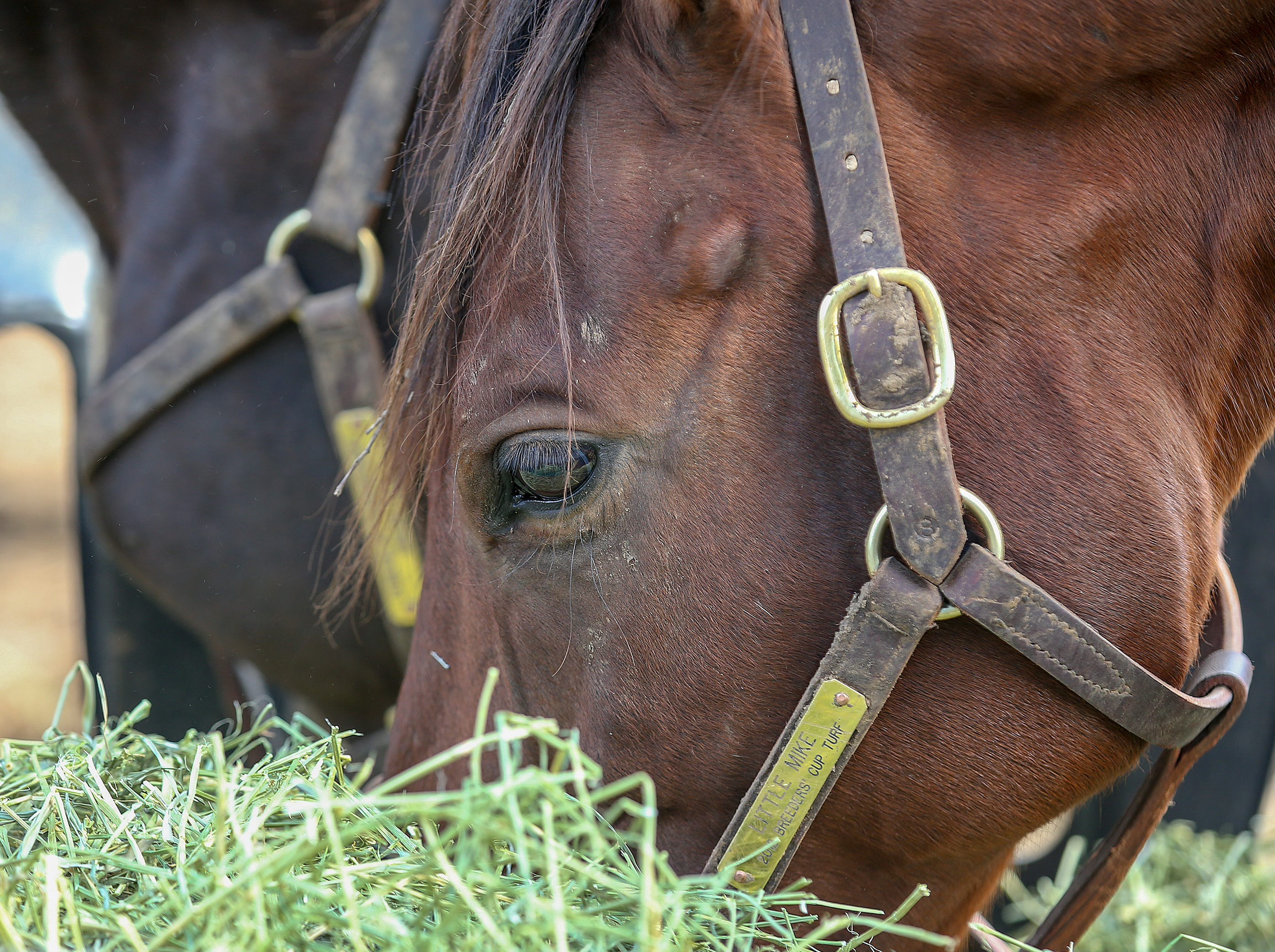 Old Friends Farm resident Little Mike won the Breeders Cup Turf in 2012.October 11, 2018