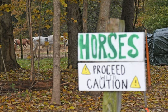 Horses graze outside the observatory at Hidden Hollow on Tuesday.