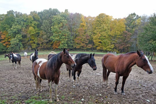 Fourteen horses at Hidden Hollow need a new home after a fire destroyed the barn where they lived. Construction of a new barn is expected to begin in about a month.