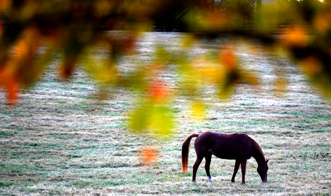 A horse gazed on a Franklin farm as some trees start to change color on Oct 30, 2018.