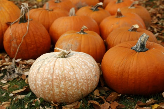 A pumpkin sale fundraiser run by the St. Mary's Catholic Church Youth Group concludes today in Farmington.