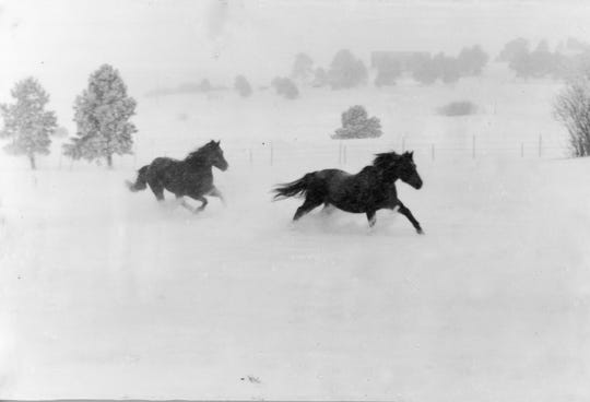 Free horses run with the spirit of champions.