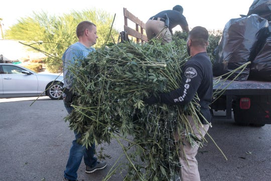 Cannabis seized by Cannabis Regulation Task Force on Tuesday, Oct. 30, 2018, in Thousand Palms. The Cannabis Regulation Task Force includes personnel from the Riverside County sheriff's and district attorney's offices, Hemet and Riverside city police.