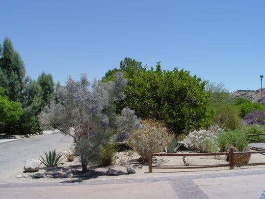 Smoke Tree Ranch regulations protect the undisturbed desert allowing smoke trees and others to remain undisturbed at these older homes.