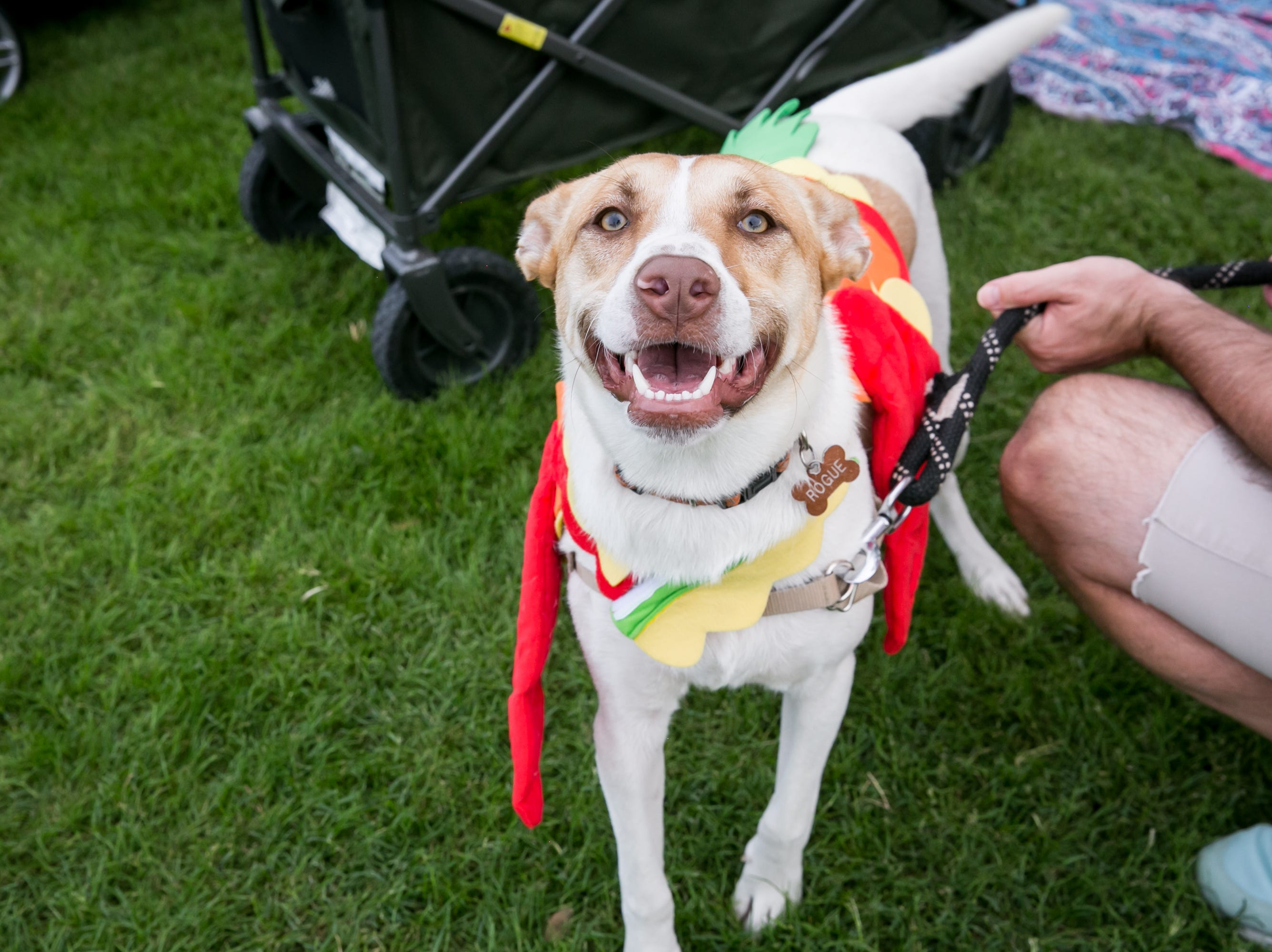 The dogs were so happy during Howl-o-Ween at Hance Park on Sunday, October 28, 2018.