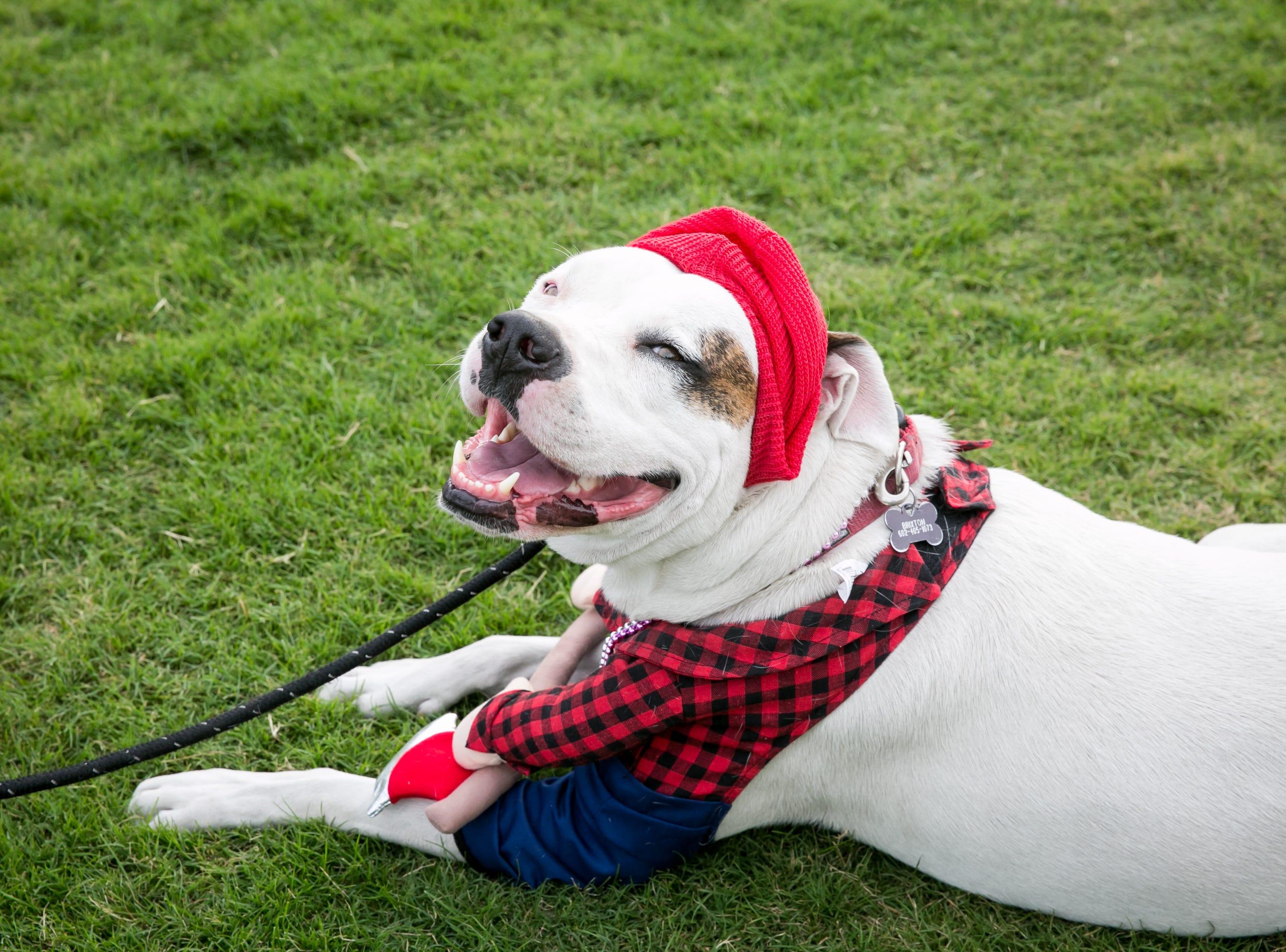 This dog had a great time during Howl-o-Ween at Hance Park on Sunday, October 28, 2018.